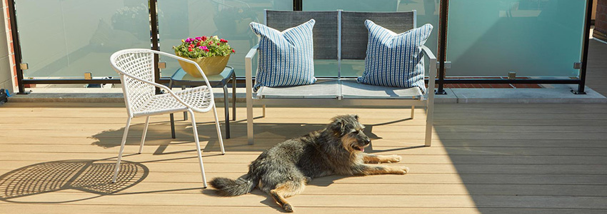 Best composite decking for full sun featuring TimberTech AZEK Vintage Collection Weathered Teak & dog laying comfortably