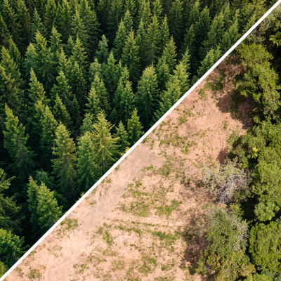 Composite image of a lush forest and one devastated by deforestation